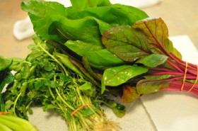 Swiss chard and some spicy little herb whose name I can't remember