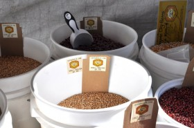 Dried beans at Cayuga Organic