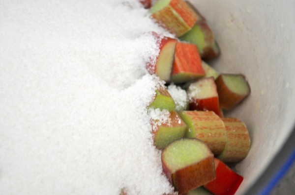 Rhubarb + Sugar = Happiness