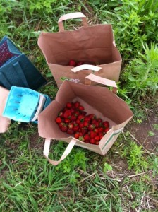 Strawberry Haul